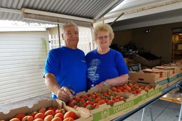 Man and woman in blue shirts standing behind a conveyor belt full of tomatoes
